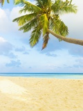 Palm Tree and Beach in the Maldives Photographic Print by John Harper