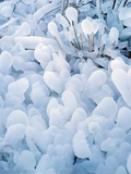 Ice Covered Grasses Photographic Print by Steve Terrill