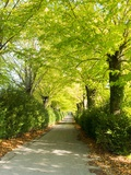 Tree Lined Road with Bright Green Trees Photographic Print by Terry Eggers