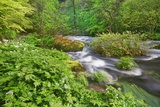 Brook in Beech Forest Photographic Print by Frank Krahmer