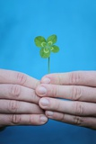 Man Holding Four-Leaf Clover Photographic Print by Joe Petersburger