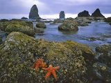 Cannon Beach Photographic Print by Steve Terrill