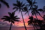 Palm Trees at Sunset on Keawekapu Beach, Wailea, Maui, Hawaii Reproduction photographique par Ron Dahlquist