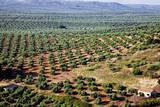 Olive Trees Seen from Town of Banos De La Encina in Spain Photographic Print by Julianne Eggers