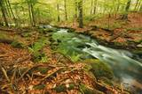 Forest Brook through Beech Forest with Deadwood Photographic Print by Frank Krahmer