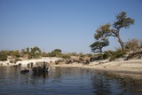 Elephants in Chobe River, Botswana Photographic Print by Richard Du Toit