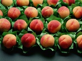 Peaches on Green Tissue Paper Photographic Print by John Turner