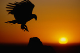 Golden Eagle at Sunset Photographic Print by W. Perry Conway