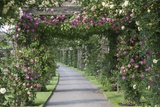 Arbor of Roses Photographic Print by Joanna Jackson
