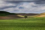 Rolling Wheat Fields with Lone Tree Photographic Print by Terry Eggers