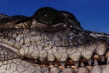 Eye of an American Crocodile Photographic Print by W. Perry Conway