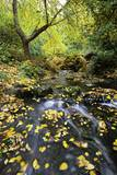 Fall Colors, Crystal Spring Garden, Portland, Oregon Photographic Print by Craig Tuttle