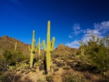 Sonoran Desert and Mountains of the Saguaro National Park Photographic Print by Terry Eggers