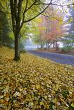 Fall Colors in Morning Fog, Happy Valley, Oregon Photographic Print by Craig Tuttle
