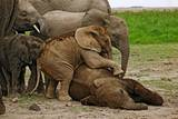 Young African Elephants Photographic Print by Martin Harvey