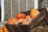 Pumpkins in a Box Photographic Print by Joanna Jackson