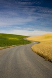 Winding Back Country Road through Winter and Spring Wheat Fields Photographic Print by Terry Eggers