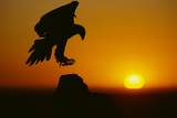 Golden Eagle Silhouette at Sunrise Photographic Print by W. Perry Conway