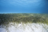 Seagrass Beds Photographic Print by Stephen Frink