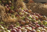 Apples in Straw Photographic Print by Joanna Jackson