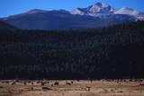 Elk Herd near Long's Peak Photographic Print by W. Perry Conway