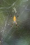 Orb Weaver - Arachnids Photographic Print by Gary Carter