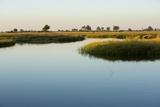 Okavango Delta Photographic Print by Michele Westmorland
