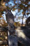 Great Horned Owl Photographic Print by W. Perry Conway