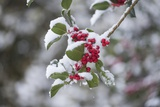 Red Berries in the Snow Photographic Print by Joanna Jackson