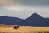 Mountain Zebra in Field Photographic Print by Richard Du Toit