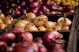 Onions and Shallots Fresh Produce Photo Poster Print Posters