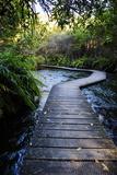 Boardwalk in Te Waikoropupu Springs Declared as Clearest Fresh Water Springs in the World Photographic Print by Michael Runkel