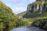 Lush Vegetation and Cliffs, Porari River, Paparoa National Park Photographic Print by Michael Runkel