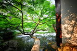 Tree Reaching Out into One of the Many Lakes in a Park at West Lake, Hangzhou, Zhejiang Photographic Print by Andreas Brandl