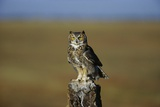 Great Horned Owl Perching on Post Photographic Print by W. Perry Conway
