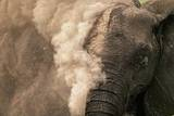 Elephant Dust Bathing Photographic Print by Martin Harvey
