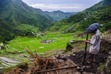 Man Working in the Batad Rice Terraces, Part of the UNESCO World Heritage Site of Banaue, Luzon Photographie par Michael Runkel