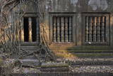 Trees Growing Through Building at Sunrise, Beng Mealea Temple, Near Angkor Photographic Print by Stephen Studd