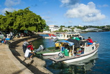 Little Boats in the Harbour of Neiafu, Vavau, Vavau Islands, Tonga, South Pacific, Pacific Photographic Print by Michael Runkel