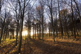 Late Afternoon Winter Sunlight Shining Through Trees in Woodland at Longhoughton Photographic Print by Lee Frost