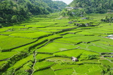 Hapao Rice Terraces, Banaue, UNESCO World Heritage Site, Luzon, Philippines, Southeast Asia, Asia Photographic Print by Michael Runkel