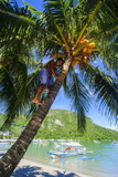 Man Climbing on a Coconut Tree, El Nido, Bacuit Archipelago, Palawan, Philippines Photographic Print by Michael Runkel
