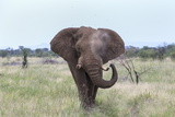 African Elephant (Loxodonta Africana) Bull, Madikwe Reserve, South Africa, Africa Photographic Print by Ann and Steve Toon