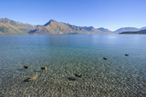 Ducks in the Turquoise Water of Lake Wakatipu, around Queenstown, Otago Photographic Print by Michael Runkel