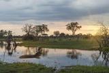 Okavango Delta, Botswana, Africa Photographic Print by Angelo Cavalli