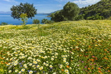 Spring Flowers in Zingaro Nature Reserve Near Scopello on This North West Coast Photographic Print by Rob Francis