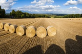 Hay Bales in the Cotswolds, Longborough, Gloucestershire, England, United Kingdom, Europe Photographic Print by Matthew Williams-Ellis