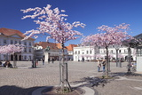 Almond Blossom in the Market Place, Landau, Deutsche Weinstrasse (German Wine Road) Photographic Print by Markus Lange