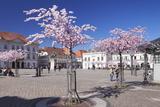 Almond Blossom in the Market Place, Landau, Deutsche Weinstrasse (German Wine Road) Stampa fotografica di Markus Lange