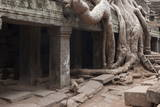 Ta Prohm Temple Tree Roots, Angkor Thom, Angkor Wat Temple Complex Photographic Print by Stephen Studd